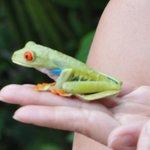 Leaf frog again