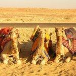 3 CAMEL ALONE