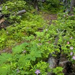 The wooded location is teeming with wild roses and other wildflowers