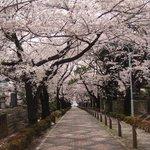 Aoyama Street Foto