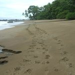 Our footprints down the beach