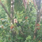 Monkey right outside our cabana
