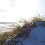 Winter sun over the dunes.