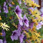 Flowers, Flowers & More Flowers!