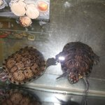 turtles of the hotel