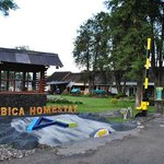 Arabica Homestay