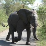 Elephants have right of way!!