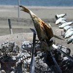 heerlijke verse vis op het strand van Torre del Mar