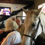 Kennedy a local horse visits the pub