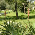Foto de B&B Villa Mediterranee