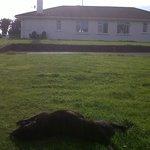 Forest Hill en un sitio muy bueno  en Connemara Irlanda