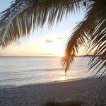 Palm trees, sun, sand and beach.