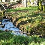 A quiet corner of the peaceful garden