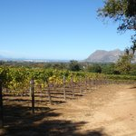 the vinyards which you can see when have some lunch