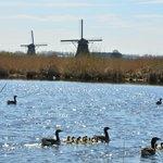 Mühlenanlagen in Kinderdijk-Elshout Foto