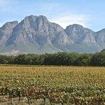 The vinyard to the mountain backdrop