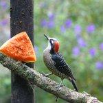 One of the many birds enjoying breakfast