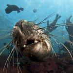 Animal Ocean Seal Snorkeling