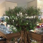 Their logo is based on this olive tree that looks like a bonsai