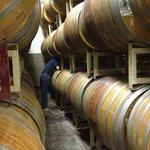 Wine maker pulling a barrel sample for us