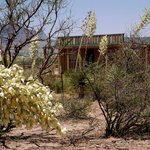 The Hideout Livery peeks through the blooming yuccas at Hideout Ranch. The Livery is the heart o