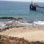 Carpinteria Harbor Seal Preserve and Rookery