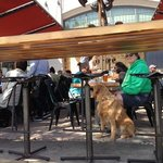 Roxie the Golden enjoying The Forge