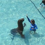 Sea lion visited the pool one day