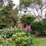 Walk through the garden to Kamahi Cottage