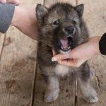 8-week old pup