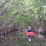 Foto de Kayak Excursions