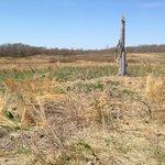 Yellow Trail Meadow