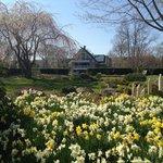 Pond shrouded in spring