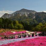 武甲山とハート型の芝桜