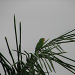Parrots Outside our Room