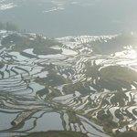 Titian / Rice terrace