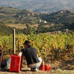 Montalcino Wine Tours - Day Tour