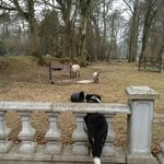 Spot and his sheep dog instincts at play!