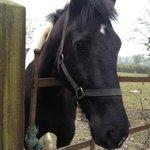 a very friendly horse, coincidentally called Ringo!