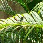 Kolibrinest direkt vor dem Balkon
