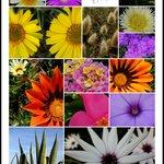 The Flowers of Algarve