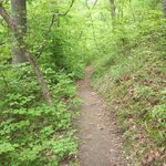 Shady Hollow Trail, McDowell Nature Preserve