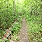 Chestnut Trail, McDowell Nature Preserve