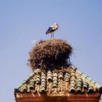 Stork's nests - viewed from the terrace