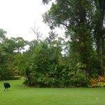 100 %ige Chance die seltenen Cassowaries zu sehen