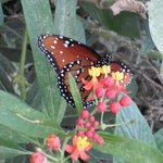 Butterfly House