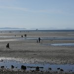 The tidal flats make a great playground at low tide. Don't eat the clams!