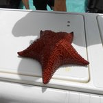 We brought the starfish onto the boat to check out and then returned it back to the water.