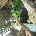 Almond Tree House