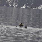 Otis (aka Sea Otter)
